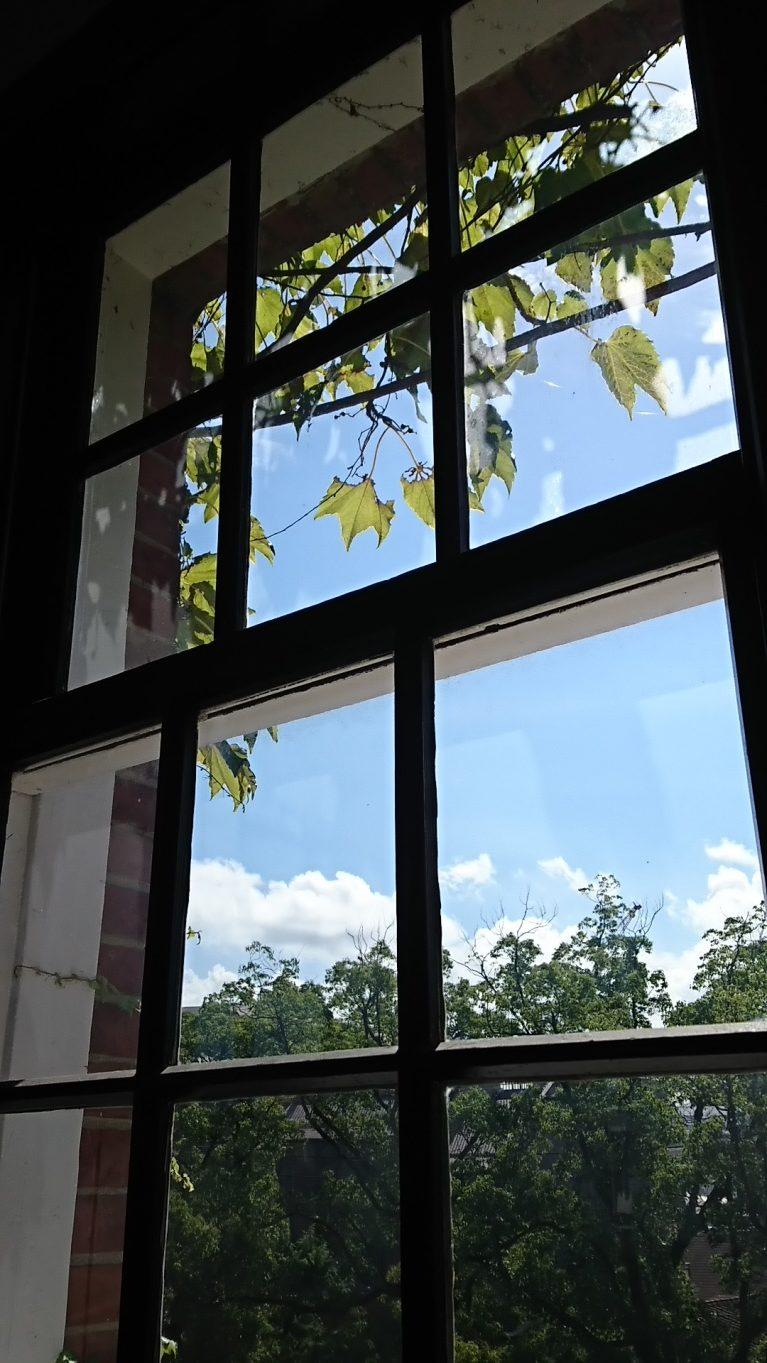 窓の外にツタと青空