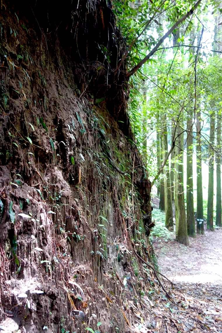 知覧城への道の脇はシラスの崖面